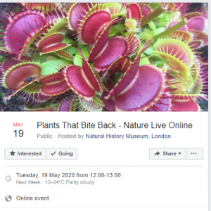 plants-copy