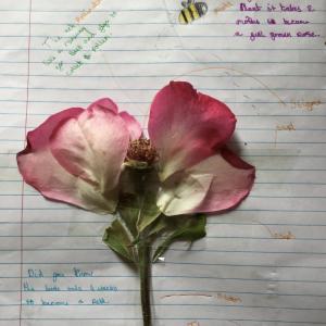 alex-flower