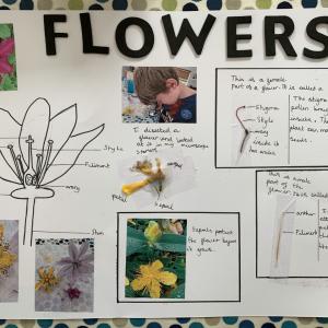 finlay-flower