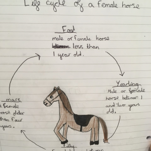 hollys-horse-lifecycle